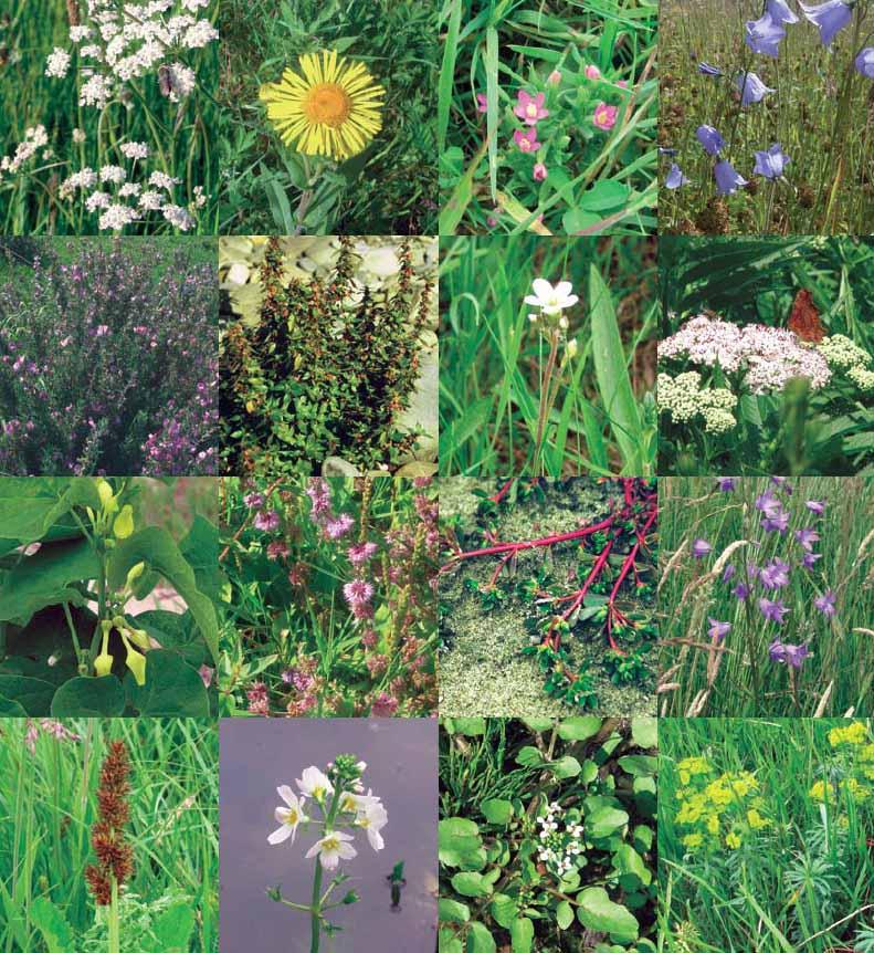 fotos flora soortenrapport copy